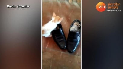 Cat turns shoe into house in minutes