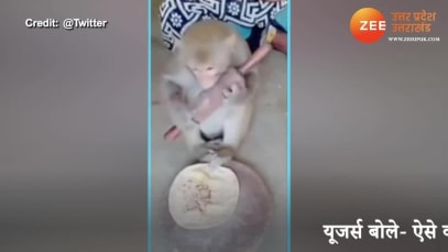 Can you make perfect rotis like this monkey?