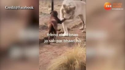 Cute: Dog and Lion's friendship wil brighten up your day