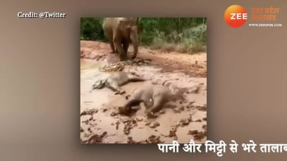 Happiness is enjoying these little things in life baby elephants fun in mud puddle took bath lying down you will enjoy this video pcup