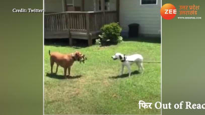 Watch Most Funny Video of 2 Dogs Cute Prank Fight You Will Not Stop Laughing upns