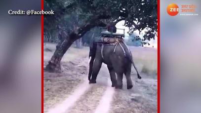 Elephant vs Tiger: who wins?