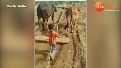 This little farmer will make your day