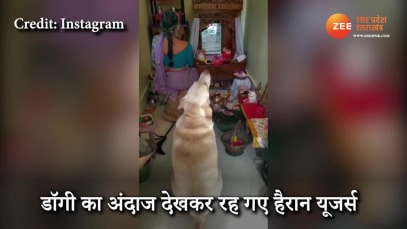 cute Dog worshiping god in a unique way with the woman video gone viral on social media uppm