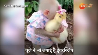 cute video of mokey and chick going viral on social media watch here uppm
